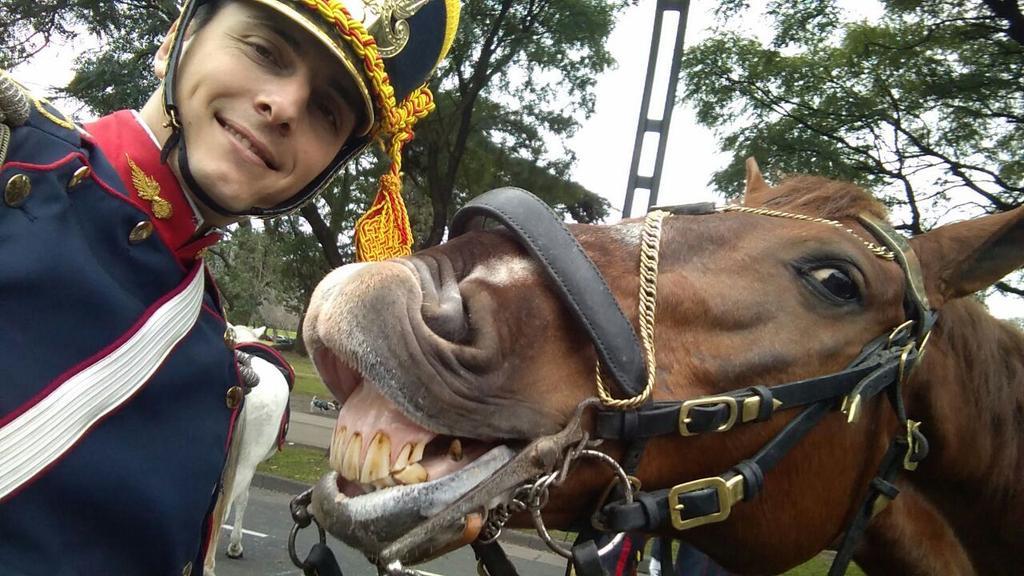 selfie granadero caballo