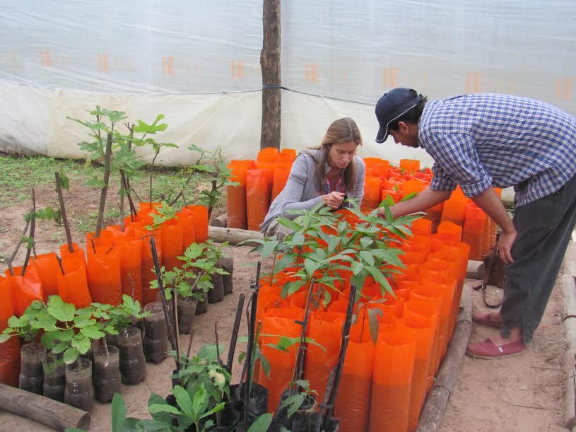 Vivero frutal de la unne produce para feriantes y la for Viveros en capital
