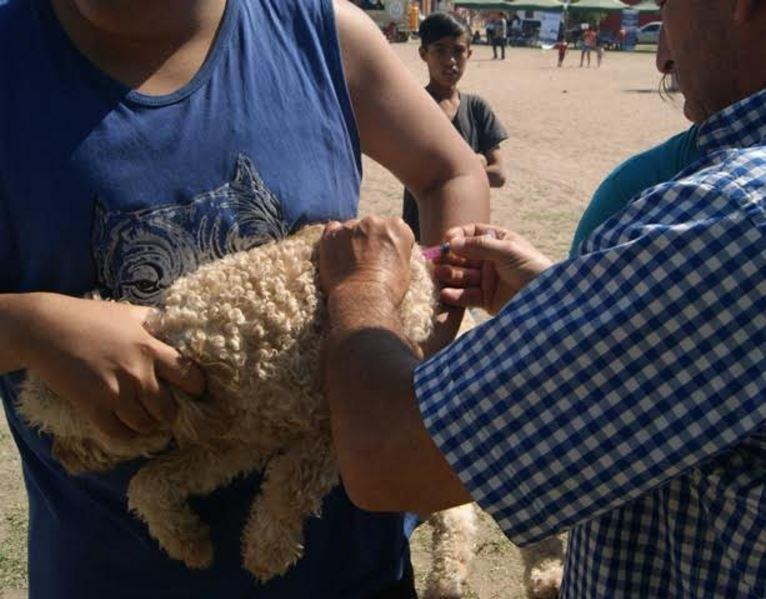 vacunacion-de-perro
