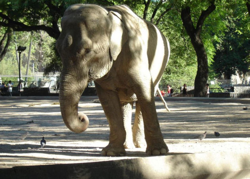 elefanta-del-zoo-porteno