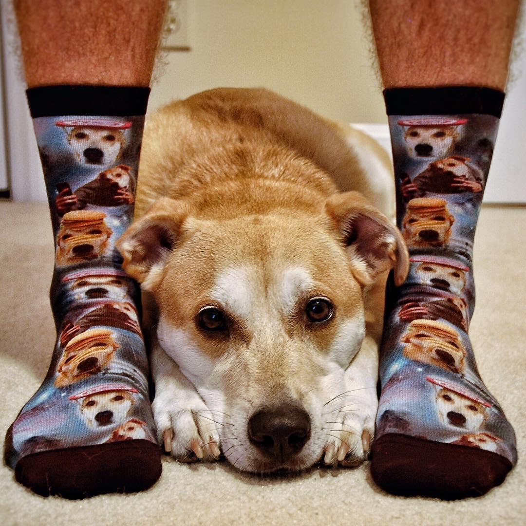 perro-famoso-mannequin-challenge