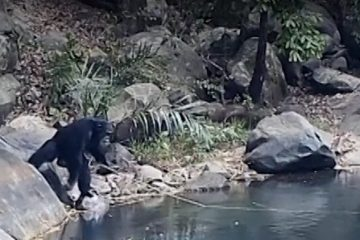 chimpance-pescando