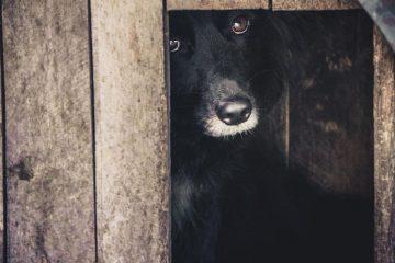perrito-escondido