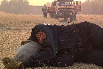 bombera-dormida-sobre-el-pasto