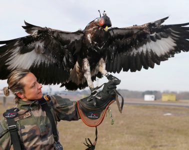A French army falconer works with a golden eagle as part of a military training for combat against drones in Mont-de-Marsan French Air Force base, Southwestern France, February 10, 2017. REUTERS/Regis Duvignau