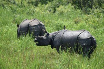 rinocerontes en la reserva