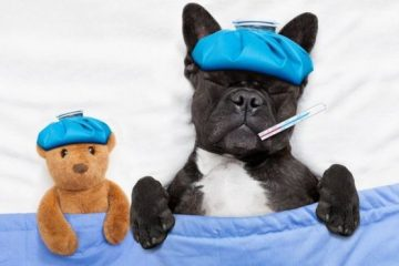 mascotas enfermas