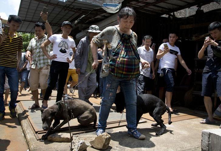 china perros