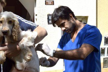 veterinario vacunando perro