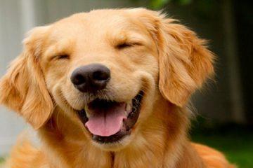 caracteristicas-generales-de-los-perros